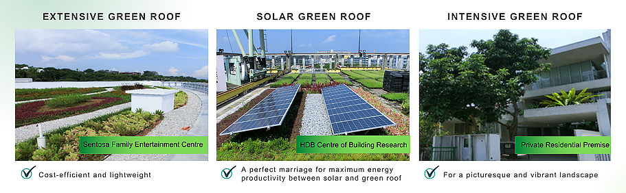 Common types of Green Roof in Singapore.